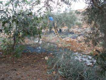 מוסקים בתוך הביוב. אוקטובר 2011, דיר איסטיה בואך רבבה