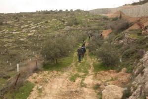 נטיעות מעבר לגדר בולאג'ה
